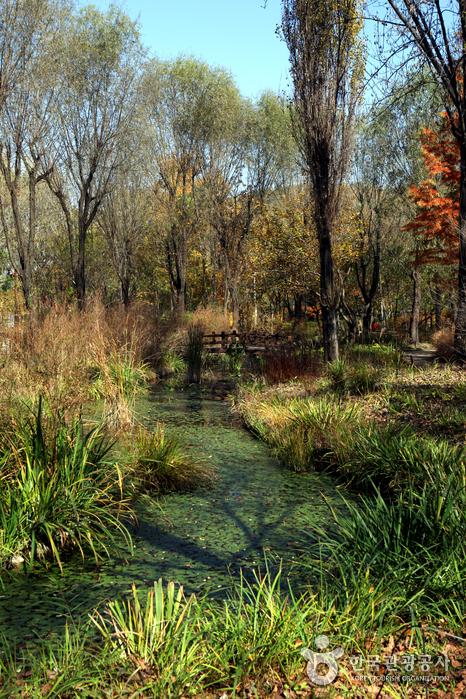 Daegu Arboretum (대구수목원)