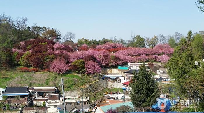 멀리 완산공원 꽃동산이 보인다.