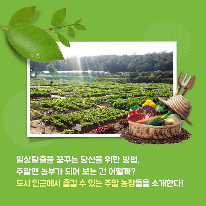 일상탈출을 꿈꾸는 당신을 위한 방법. 주말엔 농부가 되어 보는 건 어떨까? 도시 인근에서 즐길 수 있는 주말 농장들을 소개한다!