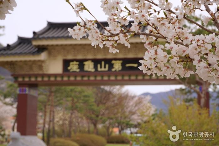 벚꽃에 둘러싸인 좌구산제일문
