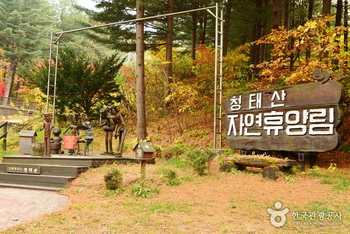 国立青太山自然休养林(국립 청태산자연휴양림)