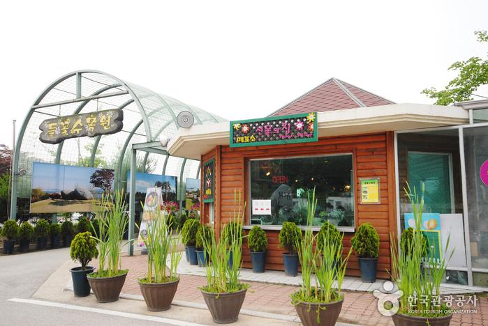 Arboretum de fleurs sauvages de Yangpyeong (양평 들꽃수목원)