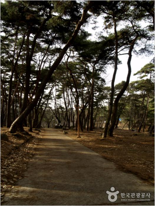 Eunhaesa Temple (은해사)