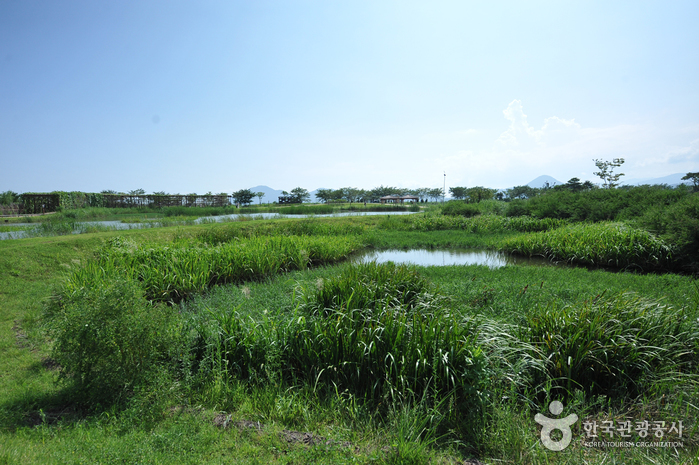 Suncheonman Bay Ecological Park (Field of Reeds) ( )