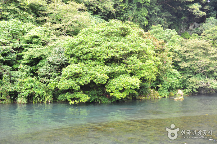 Cheonjiyeon Falls (천지연폭포)