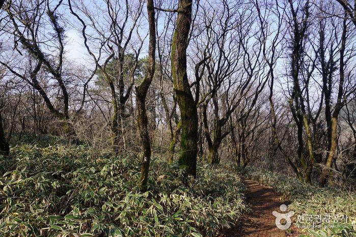 漢拏生態の森(한라생태숲)