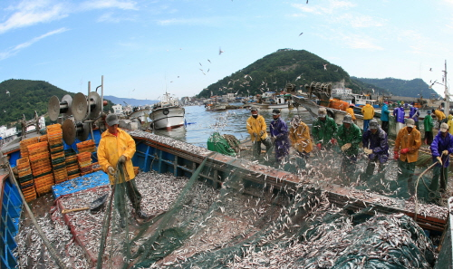 보물섬 미조 멸치축제 2018