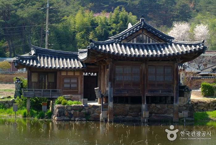 Seochulji Pond in Gyeongju (Lotus Flower), (경주 서출지)