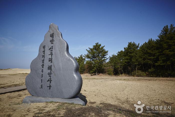 Dünenküste bei Sindu-ri (신두리 해안사구)