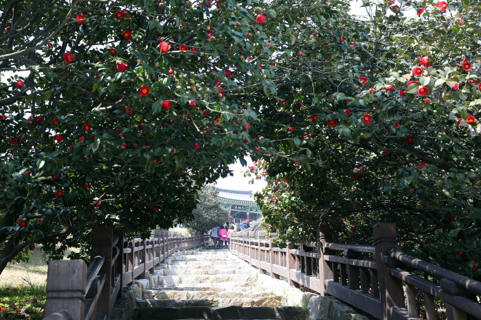 Seocheon Camellia Octopus Festival (서천 동백꽃주꾸미축제)