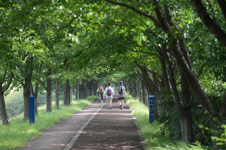 강둑길은 보행자용과 자전거용으로 나눠져 있다. 자전거를 주의하며 걸어야 한다.