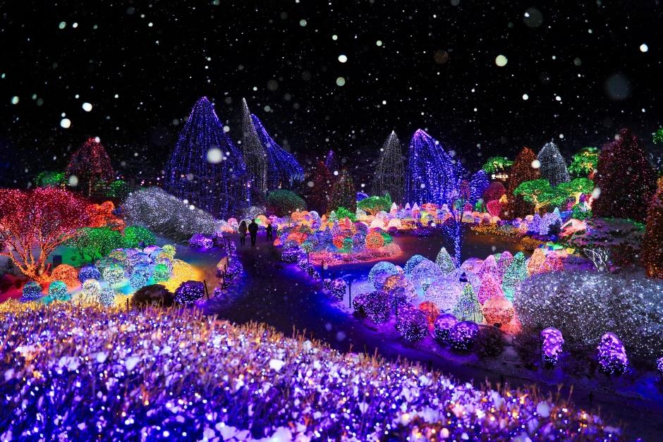 Lighting Festival at The Garden of Morning Calm (오색별빛정원전)