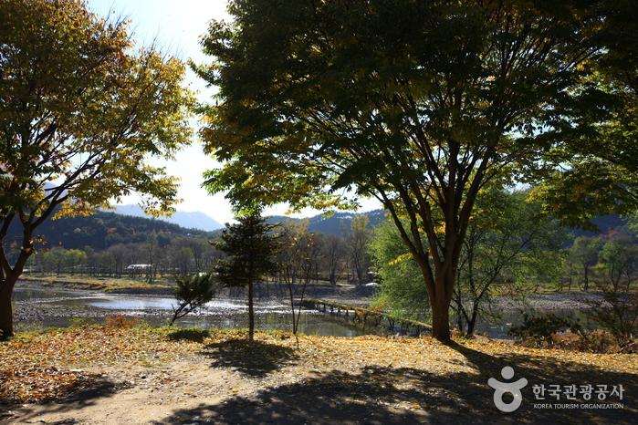 영월 섶다리 마을