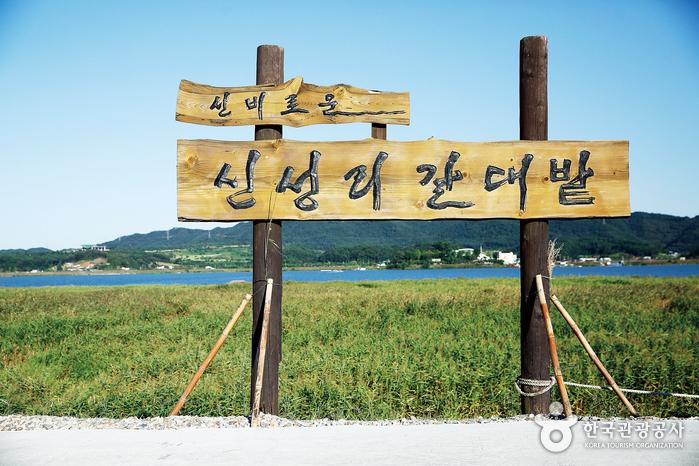 신성리 갈대밭 입구 표지판