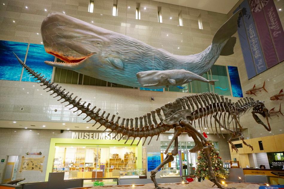 서대문자연사박물관 중앙홀에 있는 아크로칸토사우루스 화석과 향유고래 모형