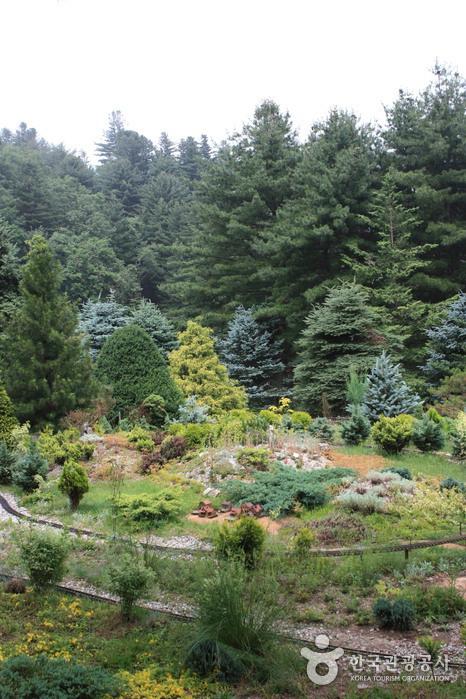 아침고요수목원 사진42
