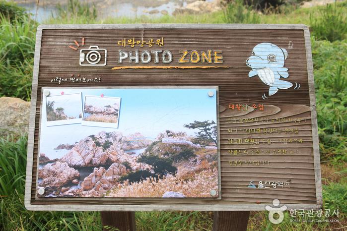 Daewangam Park (대왕암공원)