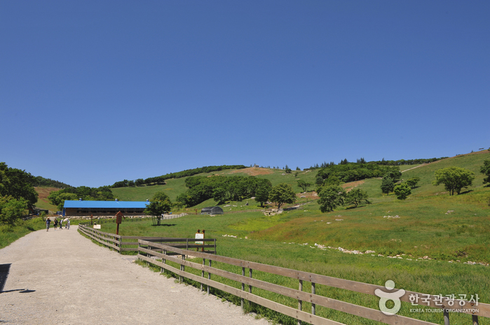 Daegwallyeong Sheep Ranch (대관령 양떼목장)
