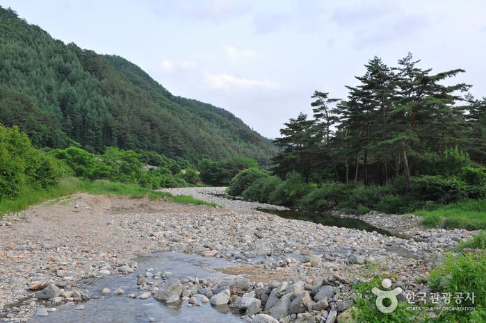 서봉사계곡 마을관리휴양지