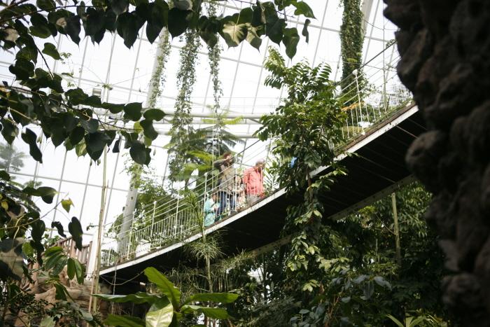 열대우림 산책로