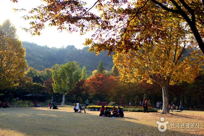 Arboretum Daegu (대구수목원)