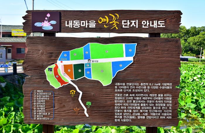 내동마을 연꽃단지 사진3