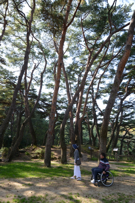 의림지의 소나무숲