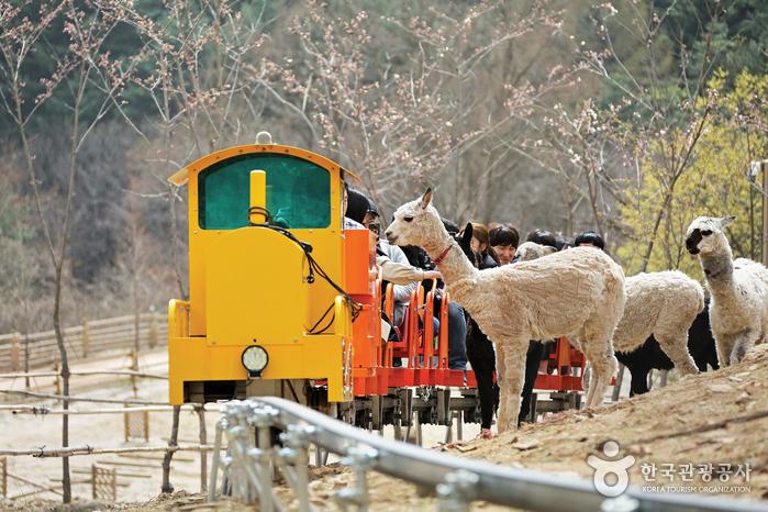 알파카월드의 친환경 기차