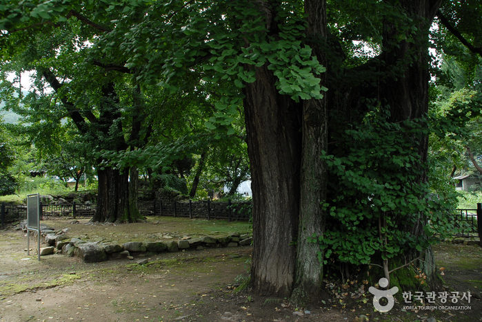 아산 맹씨 행단(맹사성 고택) 사진27