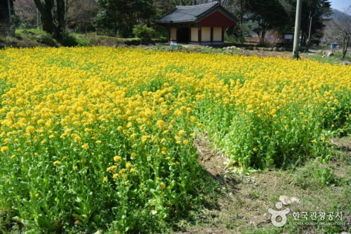 Ssanggyesa Temple (Jindo Island) (쌍계사 (진도))