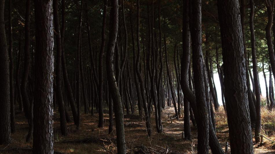 천년의 숲길