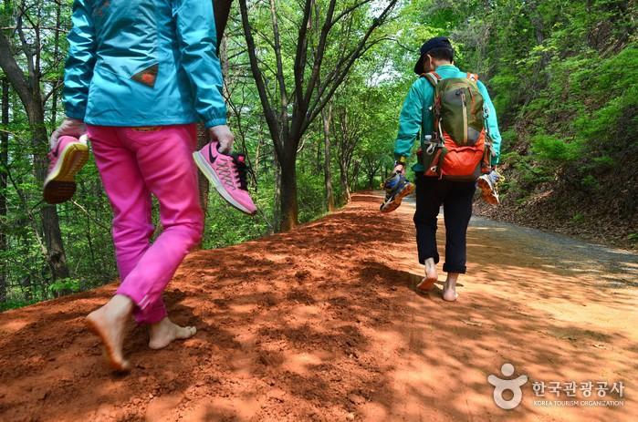 계족산 황톳길에서 즐기는 맨발산책