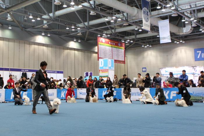 강원 FCI 국제 도그쇼 2018