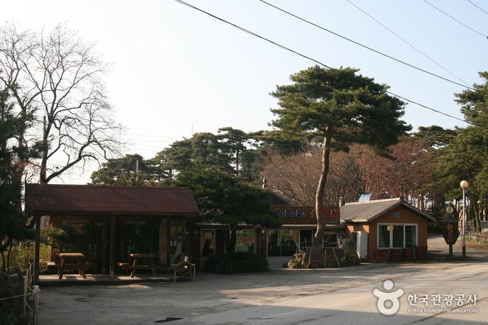 Chodang Dubu Village (초당두부마을)