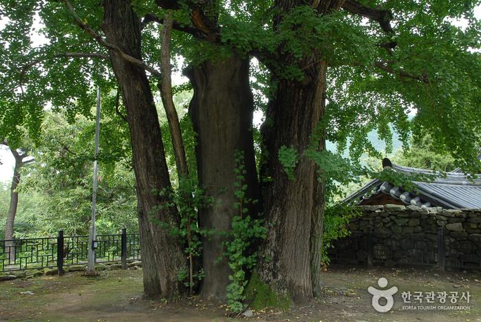 아산 맹씨 행단(맹사성 고택) 사진26