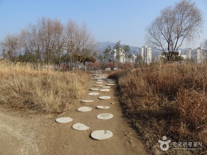 Seoul Iris Garden (Seoul Botanical Garden) (서울창포원)