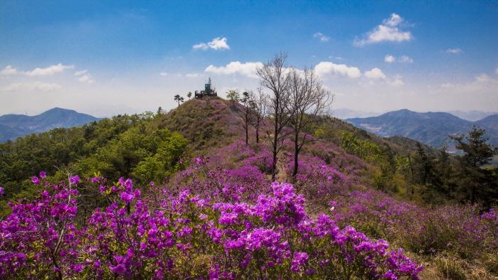 백운산 국사봉 철쭉축제 2019