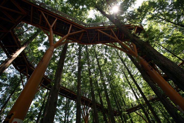 땅에서 올려다본 숲 속 어드벤처