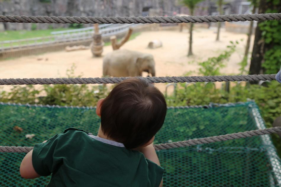 서울동물원 코끼리