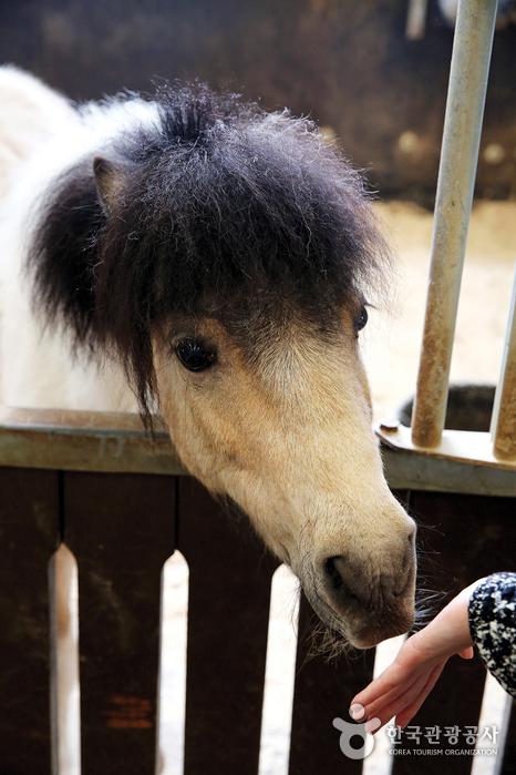 말을 가까이에서 볼 수 있다.