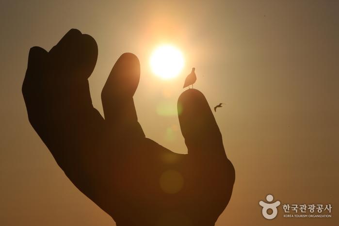 Homigot Sunrise Fest...