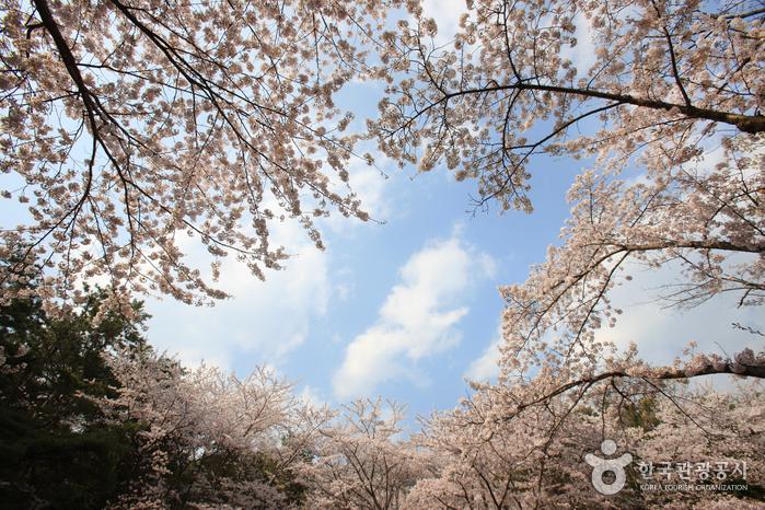 Jangboksan Sculpture Park (장복산조각공원)