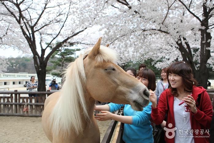말(馬)과 함께 즐기는 모습2