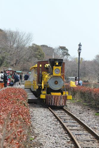 에코랜드를 달리는 기차