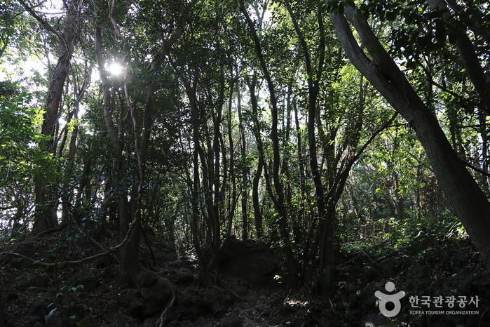 선흘곶자왈 (제주도 국가지질공원)