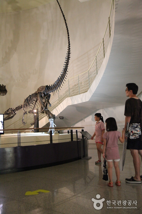 Музей естествознания Мокпо (목포자연사박물관)5
