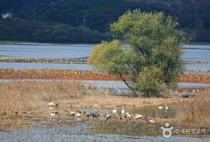 Водохранилище Чунам (주남저수지)