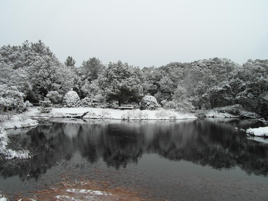 선흘 동백동산
