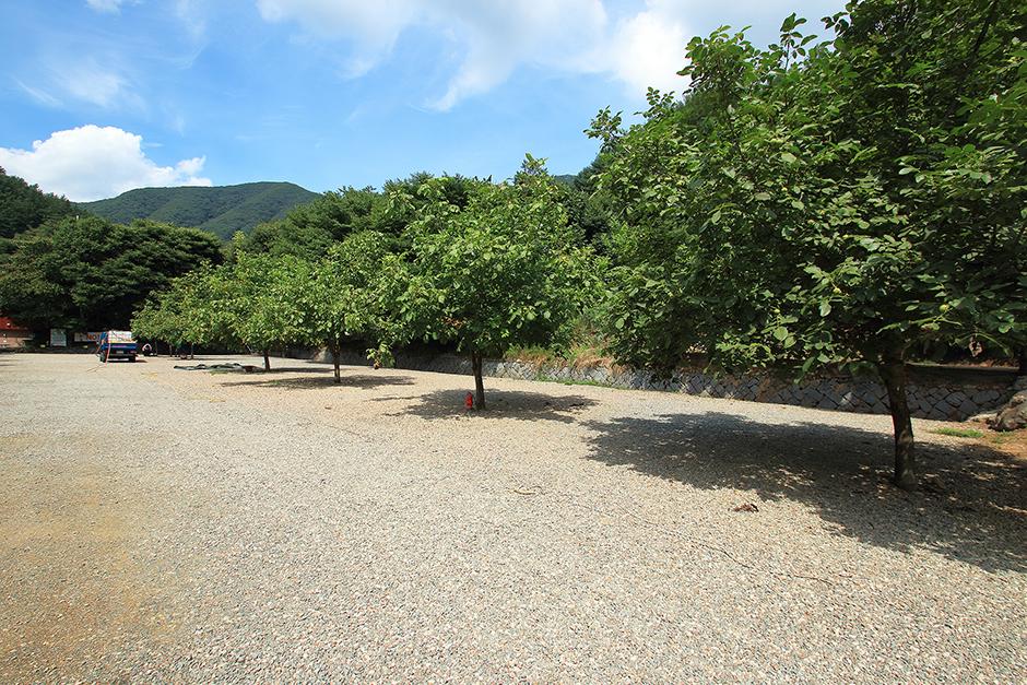 호두나무캠핑장