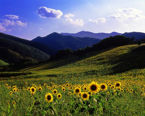 Taebaek Guwau Village (Alpine Botanical Garden) (태백 구와우마을(고원자생식물원))